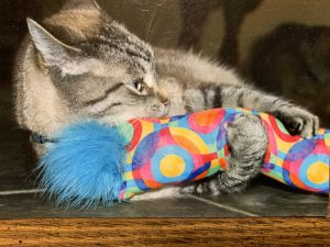 Kitty with Kitty-Stick
