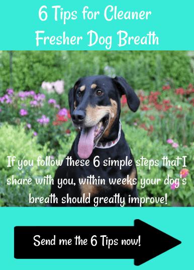 6 Tips for Fresher Dog Breath