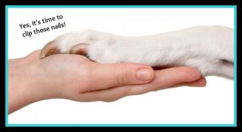 Easy Steps for Trimming your dog's nails