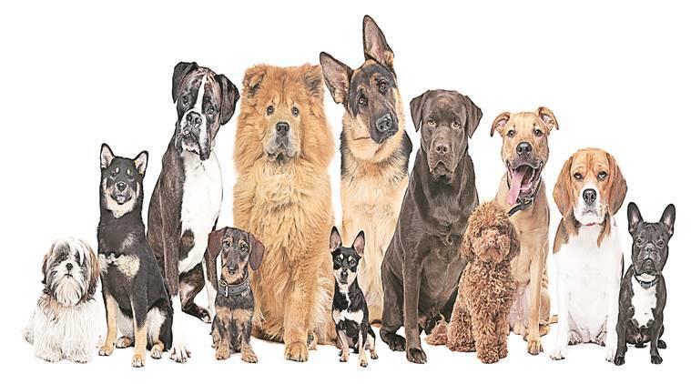 Dogs Family Tree