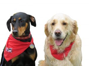 Poppy and Bailey-Therapy Dogs