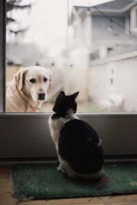 Dog looking in at cat